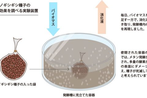 「消化液」共同研究報告レポート〈下〉 雑草種子は死滅