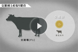 グループ動画ダイジェスト「交雑種1産取り肥育」