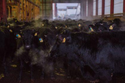 肉牛牧場スタッフ(肥育)