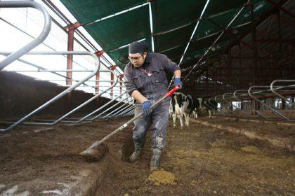 牧場清掃スタッフ(フリーストール牛舎担当)