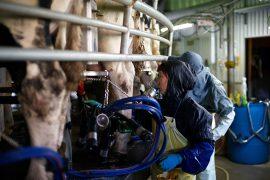 デーリィーファーム 農場HACCP認証の取得
